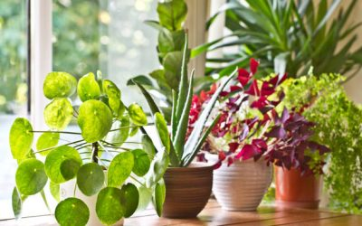 Discover 10 ideal plants for you to have in your apartment!
