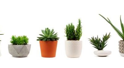 Check out different types of pots for succulents and grow your own
