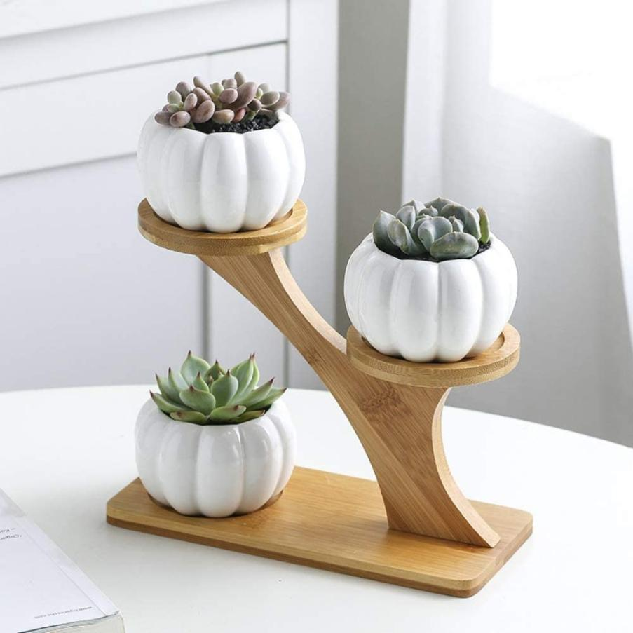 The Hand Fly is a pot for more delicate succulents.
